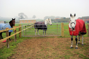 Outdoors at Marsh Farm Livery.